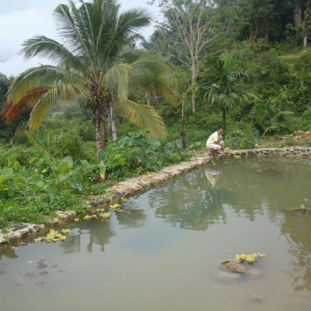 Fish pond of negros nine demo farm negros nine human for Koi pond zoning